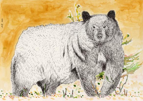 Black-Bear-Color-300dpi-contrast-small