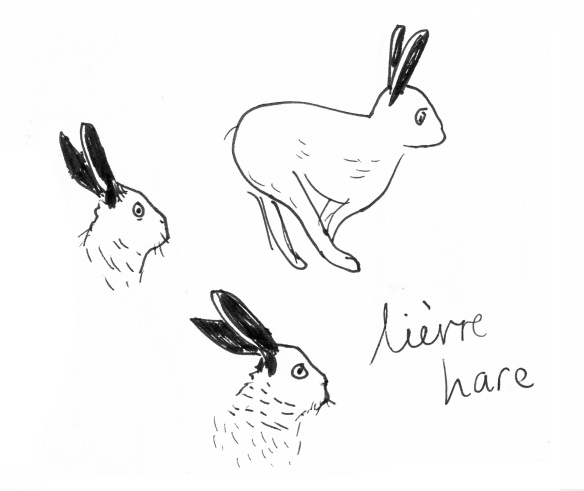 Hase-600dpi-contrast-cropped